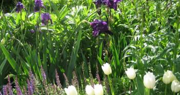 May 2016 - Gardening - Issue 251