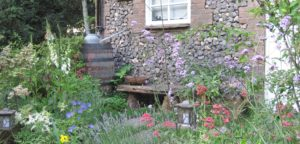 June 2016 - Gardening - Issue 252