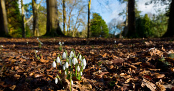 Snowdrop walks around Ireland