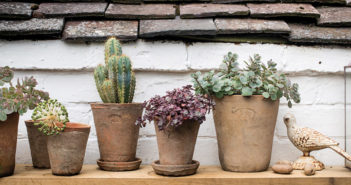 Plant Pots - August 2018 - Issue 278