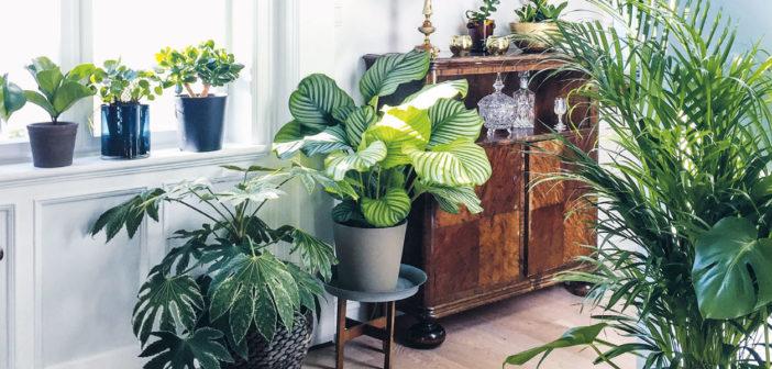 Gardening - April 2021 - Issue 308